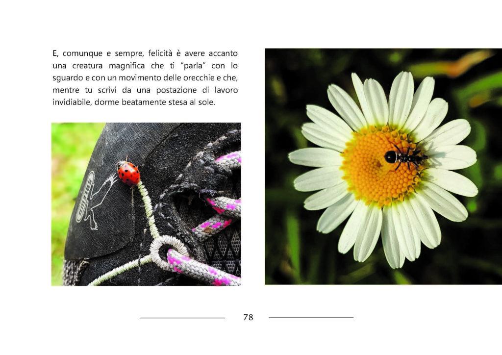https://www.progettoempatia.com/wp-content/uploads/2020/03/Luna-va-in-montagna-c-09-2019-Olivucci-rel.03-9.09.2019_Rev.-stampa-light_Pagina_078-1024x724.jpg