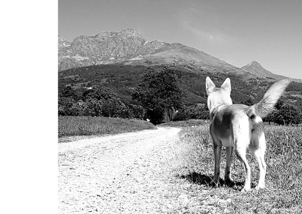 https://www.progettoempatia.com/wp-content/uploads/2020/03/Luna-va-in-montagna-c-09-2019-Olivucci-rel.03-9.09.2019_Rev.-stampa-light_Pagina_120-1024x725.jpg